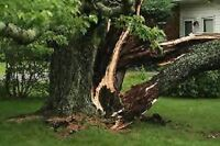 Tree Service. Tree Removal. Stump Grinding. Emergency Services.