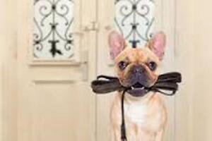Pet Care & Cleaning Service