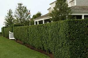 Professional Hedge/Tree  Trimming