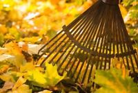 Leaf raking, fall yard cleanup, dump runs , handyman services.