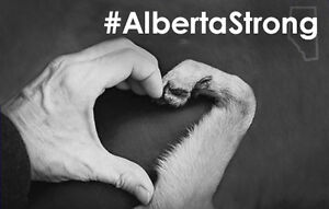 **CAR WASH 4 #ALBERTASTRONG**SAVE THE FUR BABIES**
