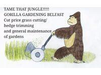 Gorilla Gardening Belfast. Cut price gardening service