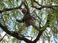 Tree removal and branch pruning