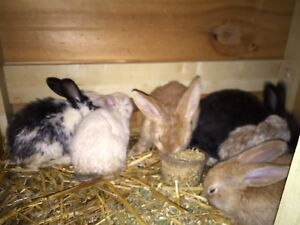 Baby Rabbits Duncraig Joondalup Area Preview