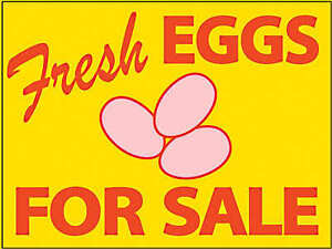 Farm Fresh Duck and Chicken eggs for sale