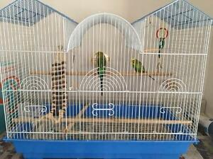Two Cute Budgies with a cage and toys