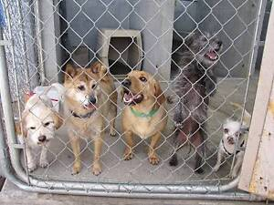 RESCUE DOGS LOOKING FOR HOMES Perth Perth City Area Preview