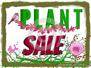 GENUINE PLANT SALE ON NOW! Huntfield Heights Morphett Vale Area Preview