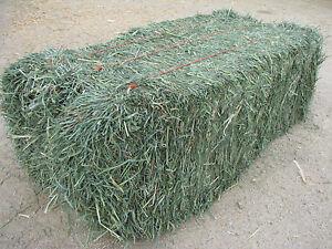 Premium Horse Hay for Sale:  $10.00 per bale.
