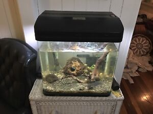 Awesome Fish Tank Bulimba Brisbane South East Preview