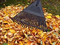 FALL CLEANUP (LEAF REMOVAL) *AFFORDABLE PRICES*