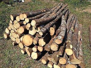 Cords of spruce or juniper St. John's Newfoundland image 1