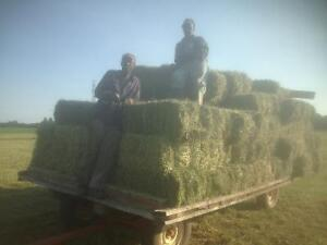 SMALL SQUARE HAY 3RD CUT GRASS Fine London Ontario image 1