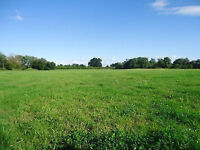LAND TO LET. GRAZING & HORTICULTURE. LONG & SHORT TERM. SMALL & LARGE SECTIONS AVAILABLE.