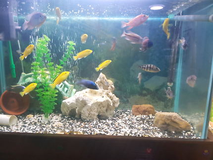 Fish Tanks Moorebank Liverpool Area Preview