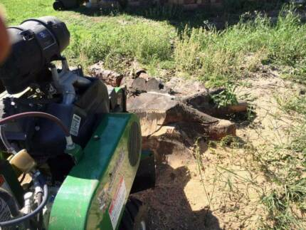 Ecological Stump Grinding - Call Alex the Arborist Today!