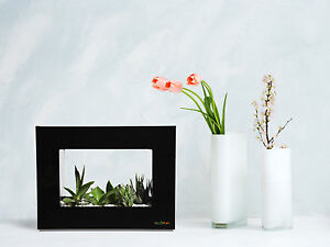 LANDSCAPE FLOWER PLANT POT FRAME | PERFECT FOR OFFICE / HOME