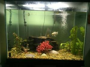 56G fish tank with accessories and goldfish
