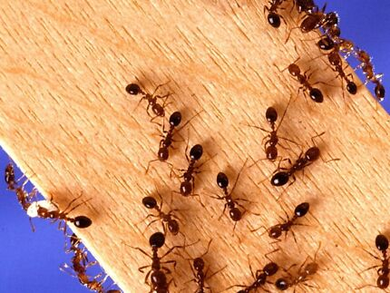 Pest Control from $70