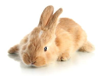 Pflegeprodukte für Nagetiere kaufen - 10 wichtige Tipps