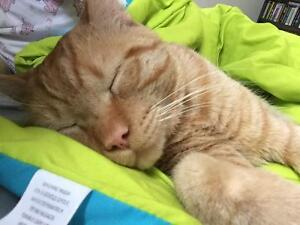 One year old male cat needs to be rehomed