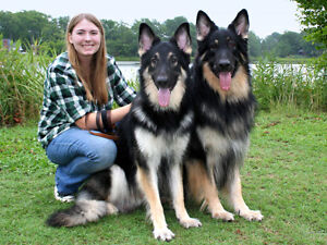 Wanted: 1 or 2 territorial dogs for hobby farm