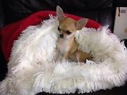 Dog Snuggle Sack