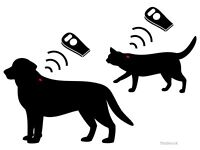 Microchipping for Dog, Cats and Rabbits