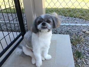 Dog Daycare and Boarding Kennel London Ontario image 7