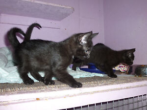 5 chatons noirs