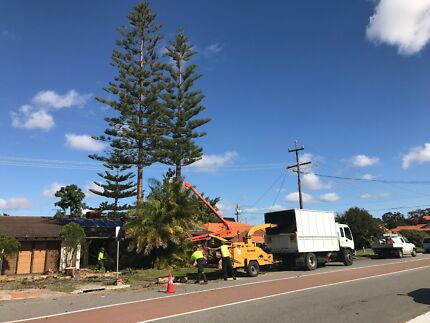 Perth Arbor Services Pty Ltd - Tree Lopping