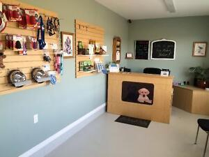 Dog Daycare and Boarding Kennel London Ontario image 2