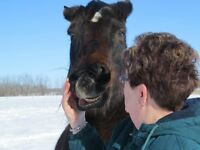 Diamond Counselling Equestrian Classes