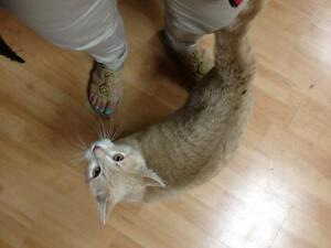 Free 9 month kitten to good home