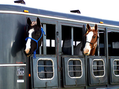 Your Guide to Buying New vs Used Horse Trailers