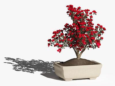 Ratgeber Bonsai Azaleen: mit dem richtigen Schnitt zu dauerhafter Blüte