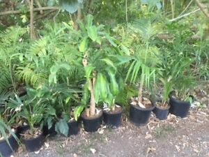 Assorted Plants, Palms, Majinartas, Happy Plants, Spafs