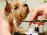 LOOKING FOR DOG GROOMING TRAINING