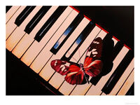 BEGINNER PIANO LESSONS in NW Calgary