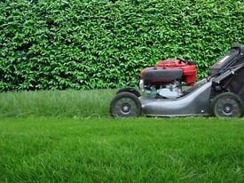 Turfing grass cutting