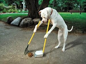 Dog poop removal service.Local Clean,fast,sanitary yard removal