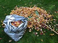 Yard Cleanup and Raking