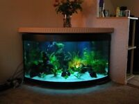 500 liter Fish tank + Internat filter = £120 With out stand , with stand £150