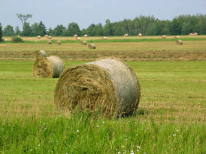 HAY,  360 round bales 4'X4', to be cut in July 2017