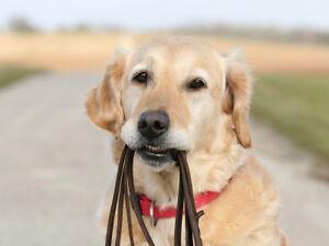 Dog Walker Available (Dawson Park Area )