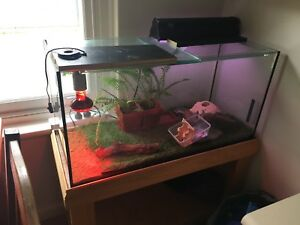 3ft bearded dragon tank Fairview Park Tea Tree Gully Area Preview