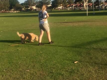 Basic puppy training and Walking Service