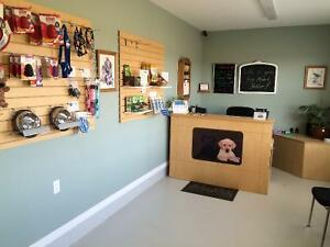 Dog Boarding Kennel and Daycare London Ontario image 2
