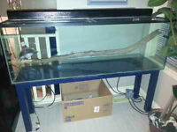 Fish or Lizard Tank / Aquarium