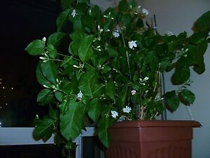 Healthy and beautiful decorative indoor plants grown by hobbyist